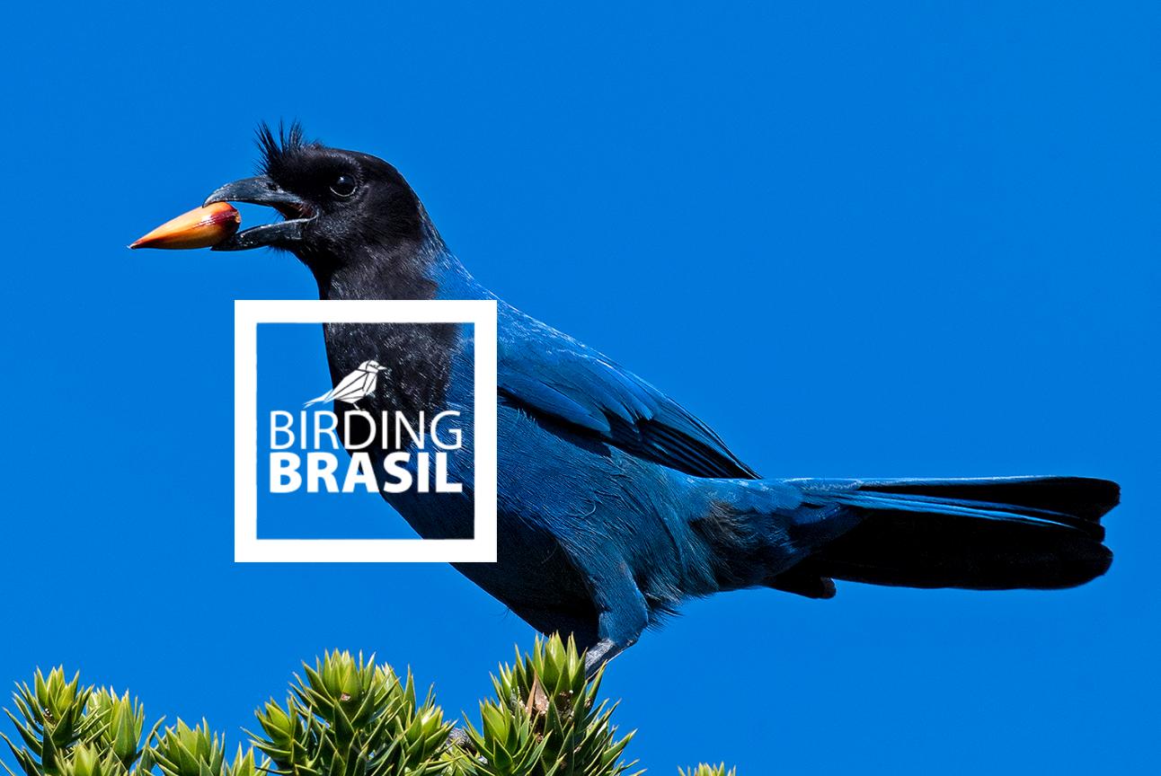 Guía Birding Brasil