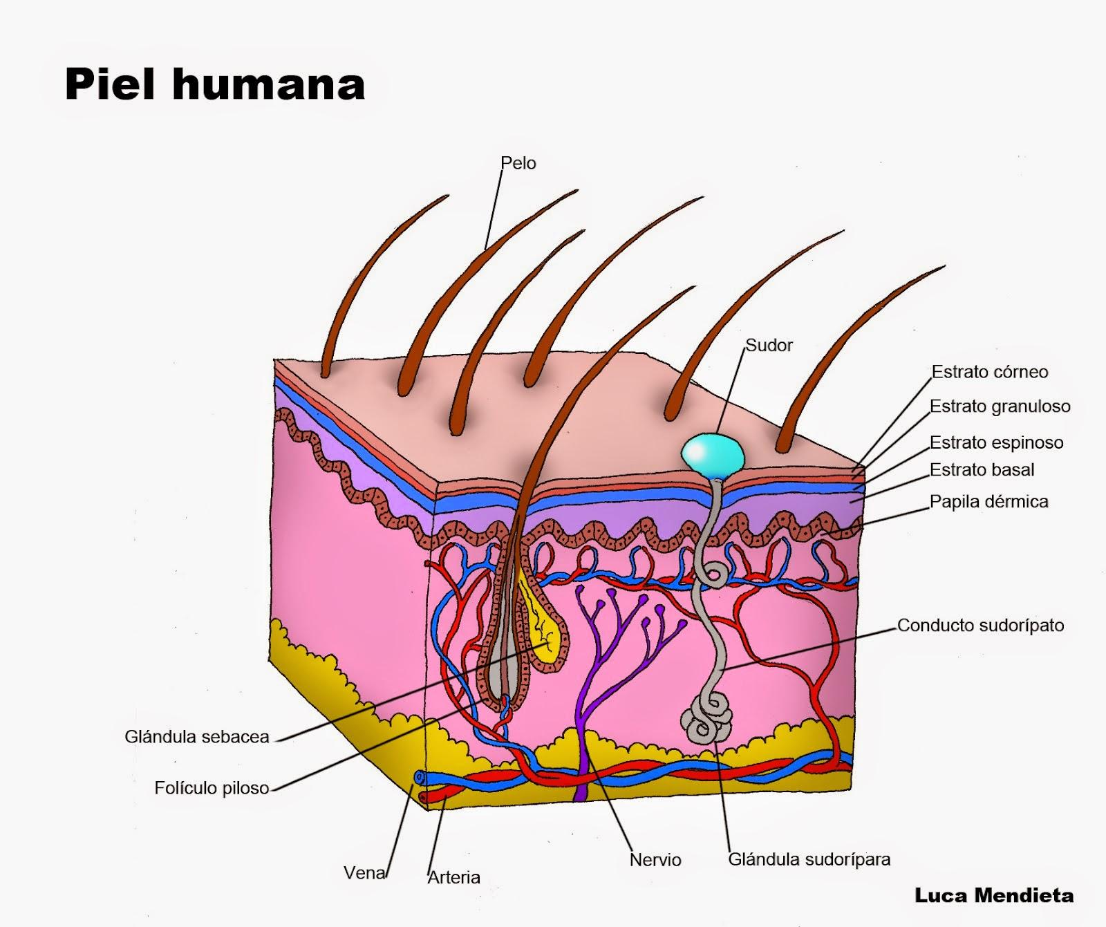 Fotos de tipos de sarna en humanos 15