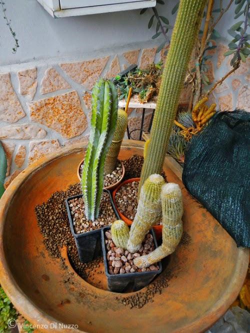 In un giardino composizione di piante grasse - Vasi con piante grasse ...