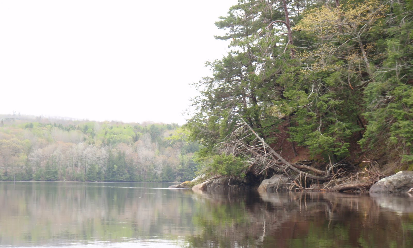 Penobscotpaddles paddle to the sea part 2 hampden to bucksport maine full of the scent of the river dirt from the hillside pine needles and grasses there was another sharp bend a mile later directing us south again geenschuldenfo Gallery