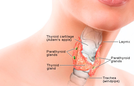 Thyroid or Uske Kaaran