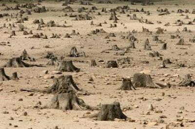 [Image: haitian%2Bdeforestation.bmp]