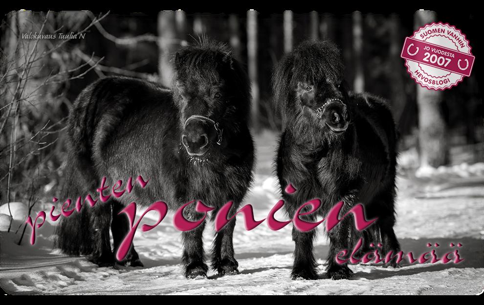 Pienten ponien elämää