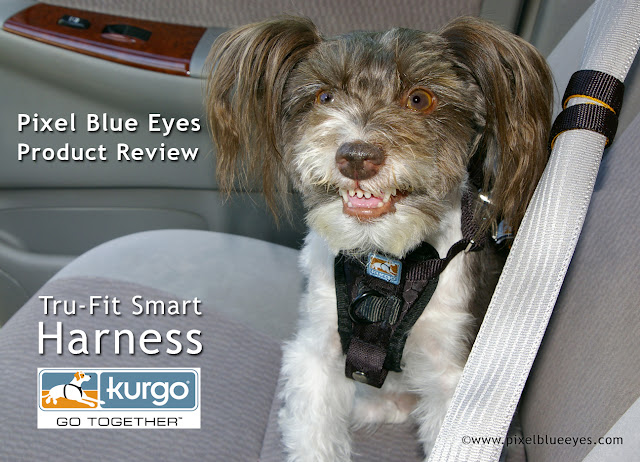 Pixel Blue Eyes Her Quot Tails Of Adventure Quot The Joy Of Car