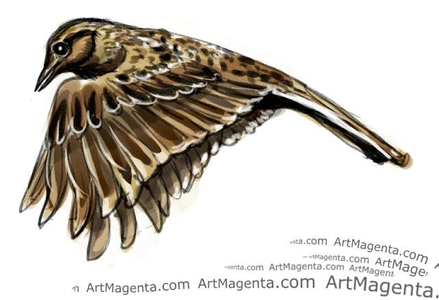 En fågelmålning av en sånglärka från Artmagentas svenska galleri om fåglar