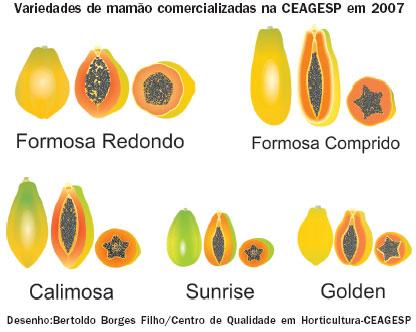 Variedades de mamão comercializadas na CEAGESP em 2007