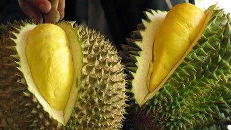 Kandungan Gizi Nutrisi Buah Durian