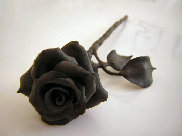 black rose meaning black rose boston black rose bush black rose tattoo ...
