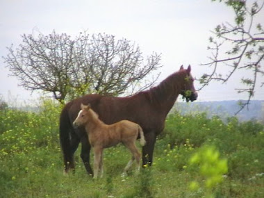 Horses in the neighbours meadow