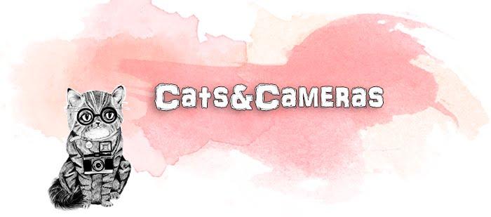 Cats&Cameras
