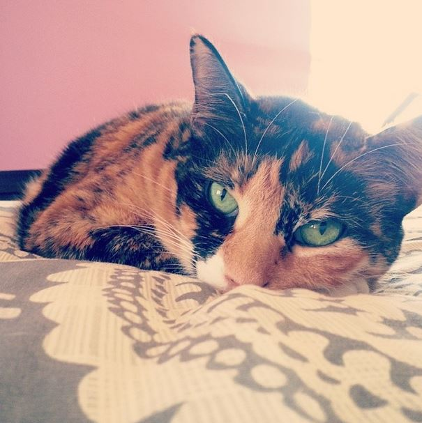 cat, calico, green eyes