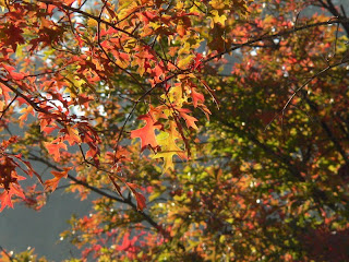 autumn leaves north florida copyright kerry dexter