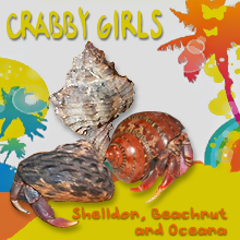 THE CRABBY GIRLS