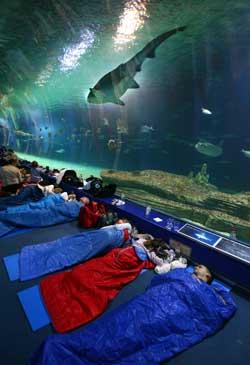 Friendly valencia atr vete a dormir con tiburones en el for Hotel oceanografic ninos