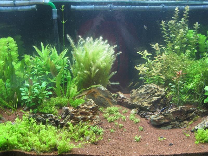 certaines plantes et rajoute d autres j ai egalement mis les plantes ...