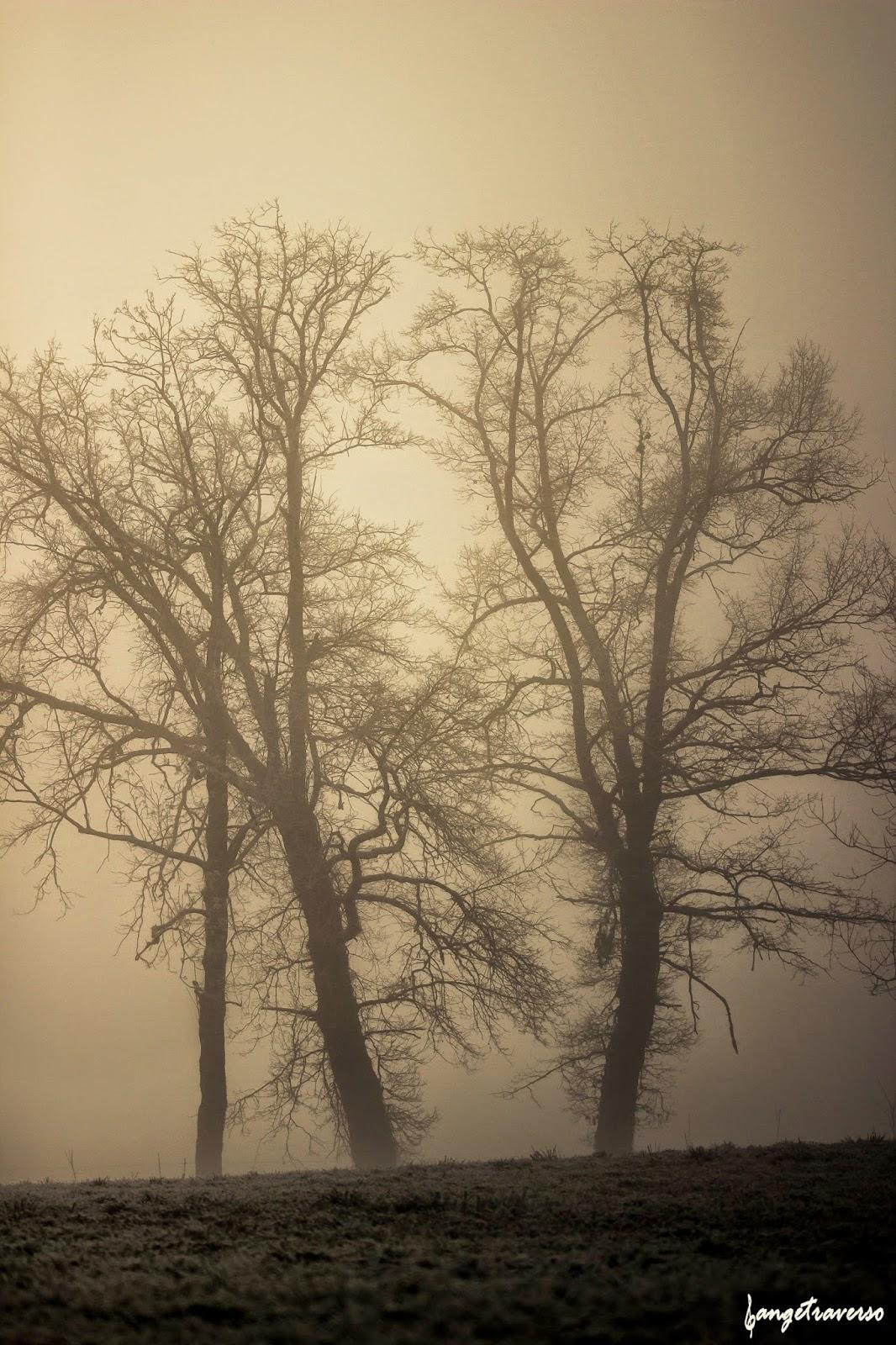 Trees in myst, in Haute-Savoie
