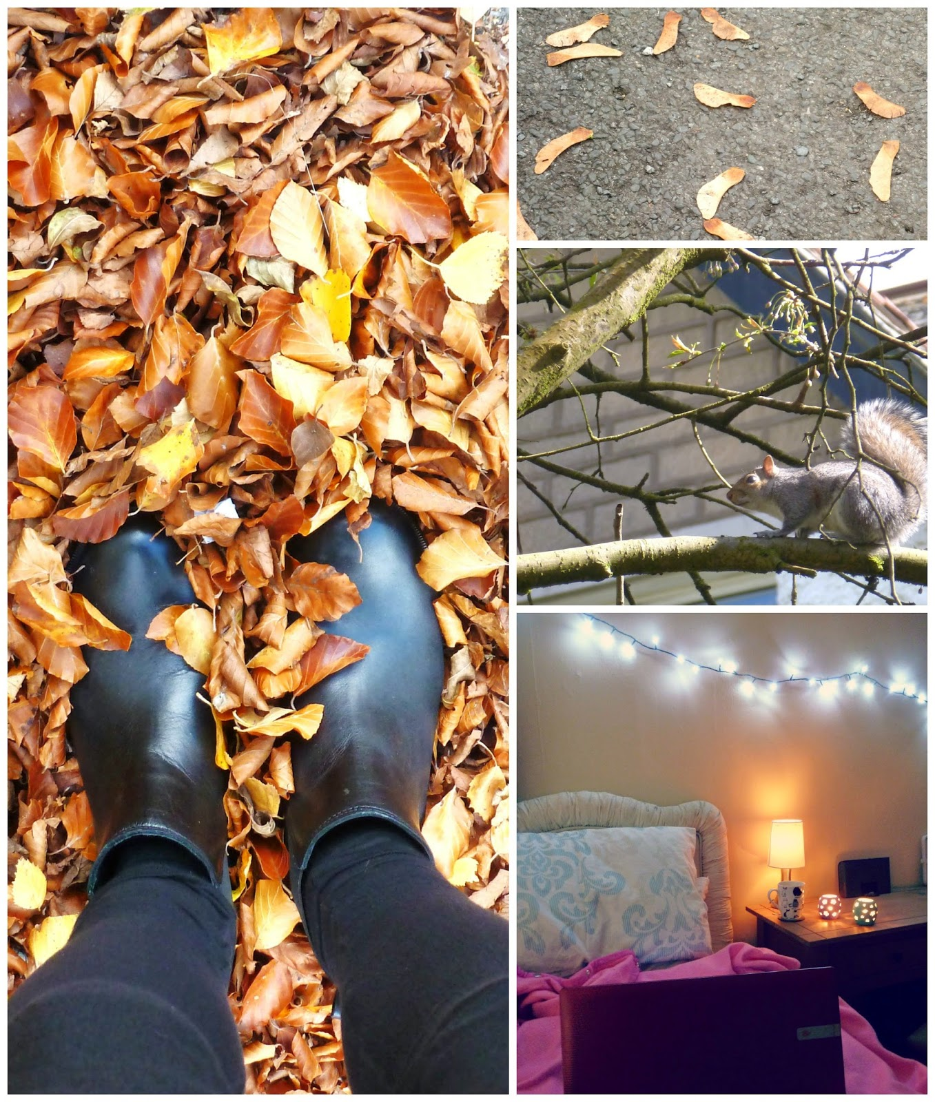Autumn leaves, chelsea boots, tumblr, spinning jenny's , squirrel, bedroom lights fairy laptop candles
