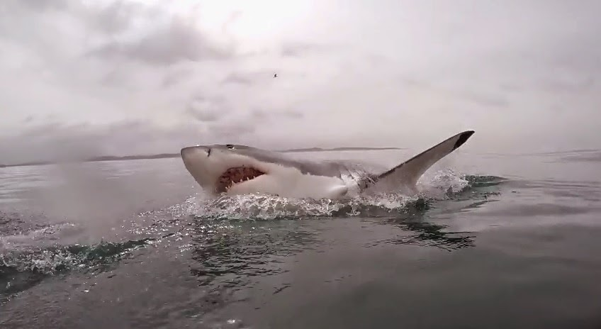 Rainy dark day during great white shark cage dive