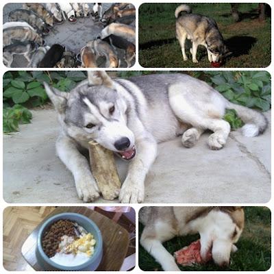 husky food