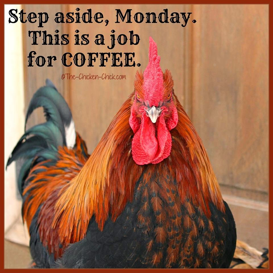 Step aside, Monday. This is a job for COFFEE. (Black Copper Marans cockerel)