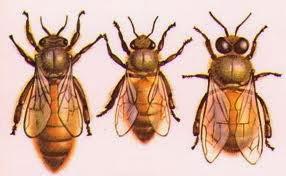 sự thật về 1 gia đình Ong