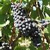 Trenta ettari di vigne per 15 milioni di euro