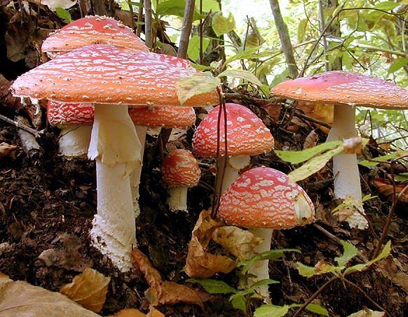 Luisa fernanda ospina junio 2011 - Tipos de hongos en la pared ...