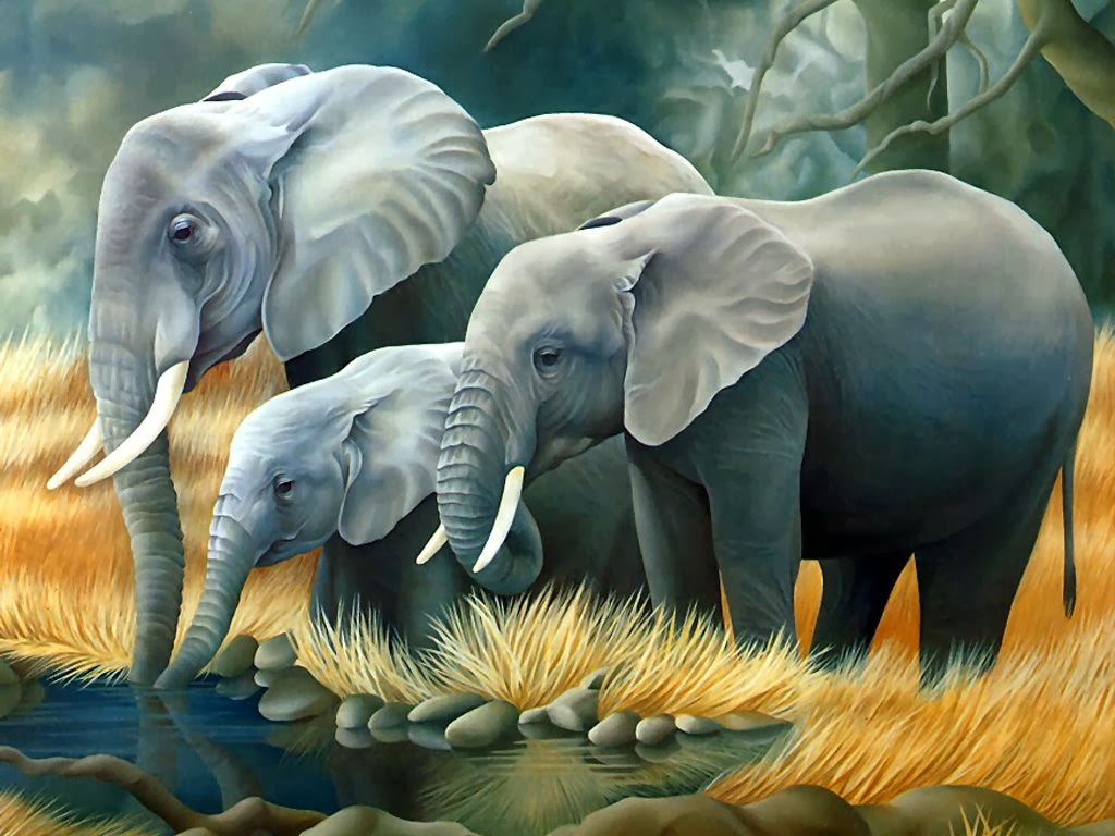 30 wallpapers of elephant photography hindi motivational quotes hd wallpapers windows 8 - Image elephant ...
