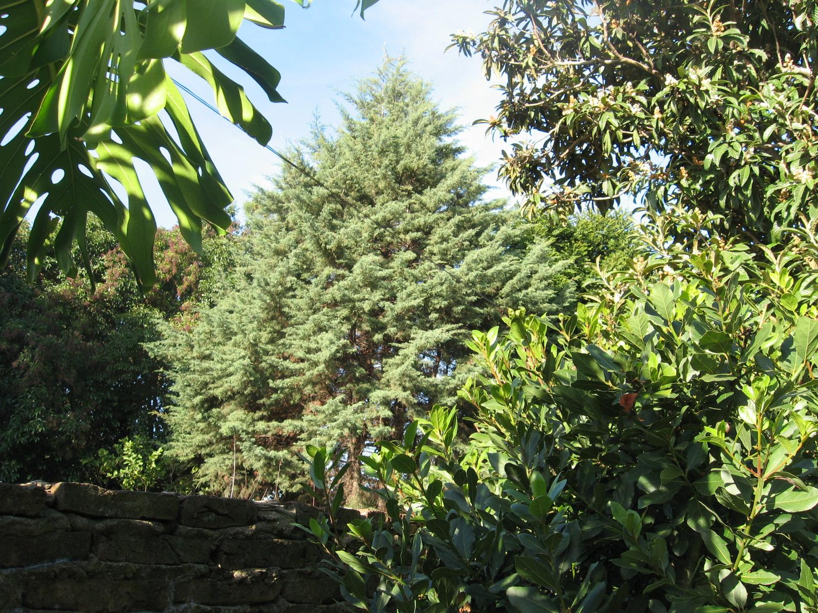 Explorando en el jard n los aromas del jard n for Coniferas de jardin