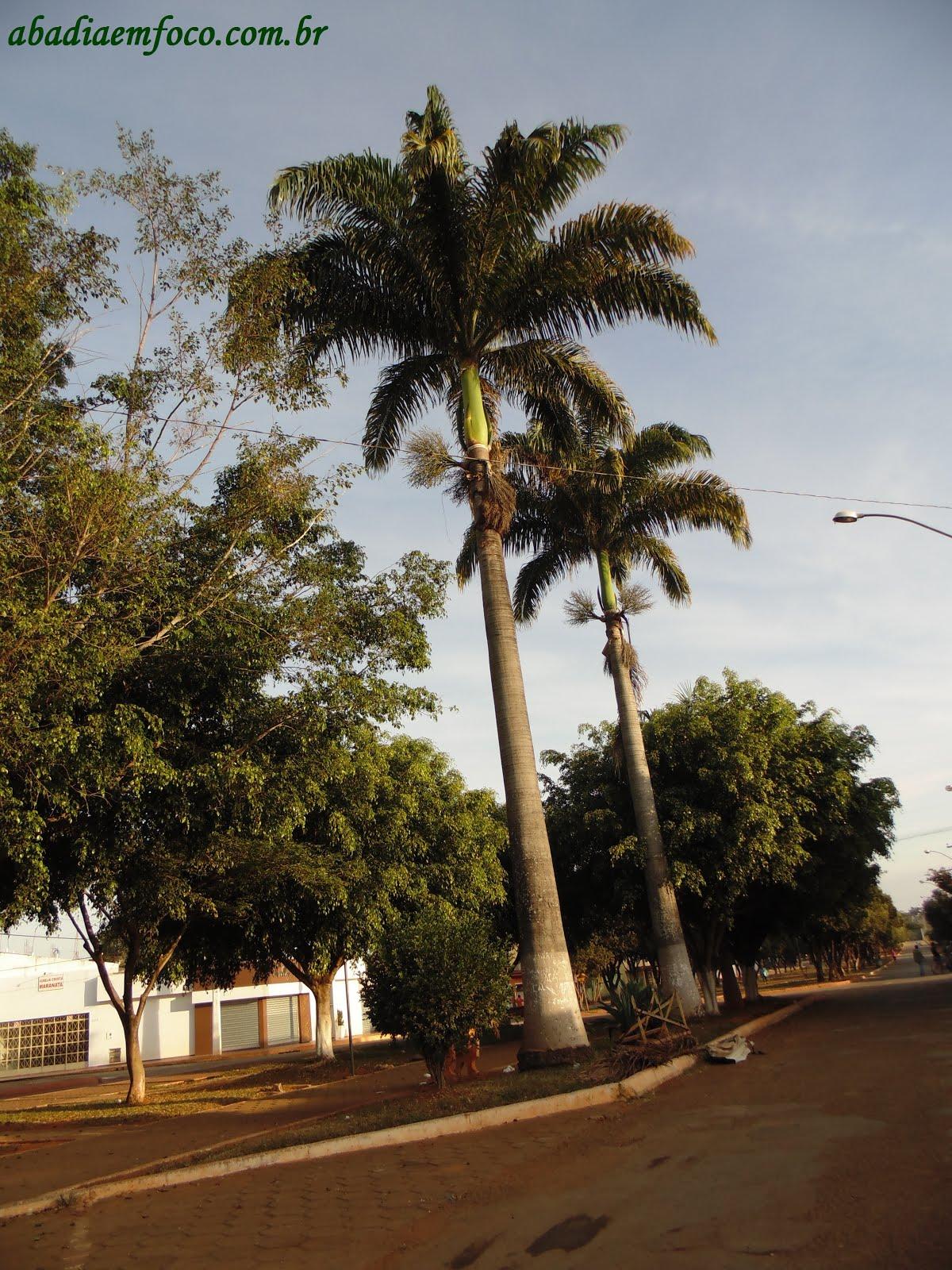 Ibitira City