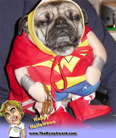 WIN! Wonder Woman Halloween Dog Costume - Awesome
