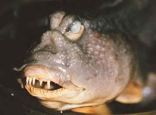 Dawkins fish