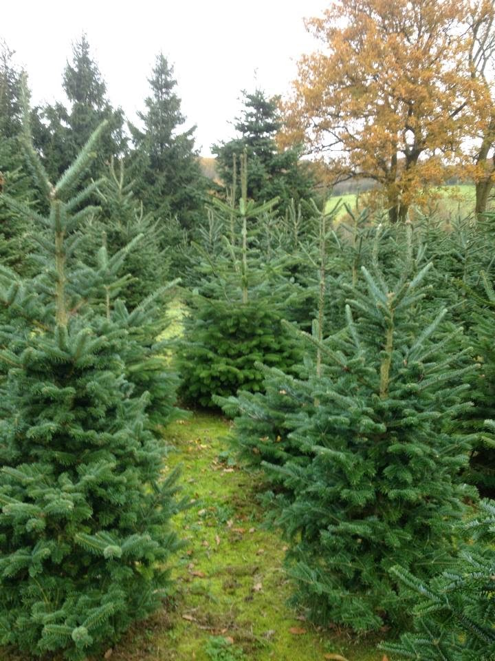 for as long as i can remember now one of our family traditions to start the festive season off is going to a fir tree farm in sarratt hertfordshire just - How To Start A Christmas Tree Farm
