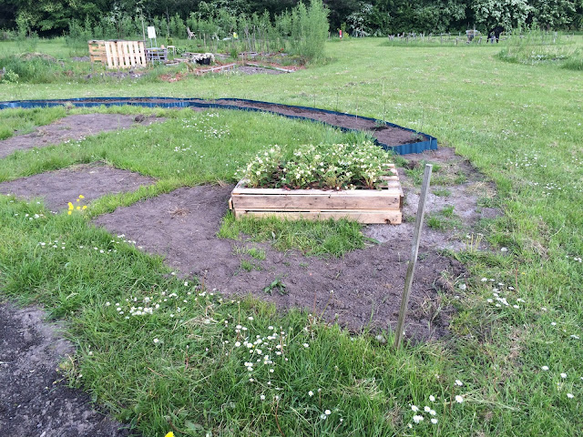 Kaffesoester's allotment with raised strawberry bed