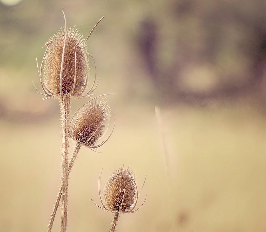 Fotografía de naturaleza Sole Picado