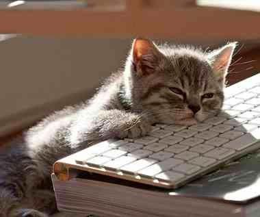 Gambar Kucing Lagi Ngeblog
