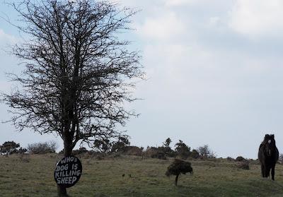 Bodmin Moor Horse