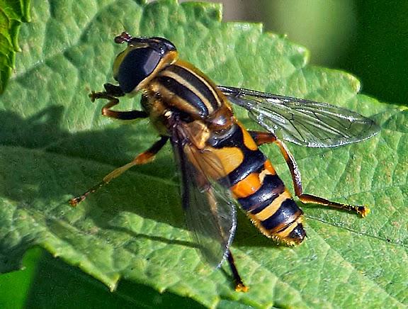 how to kill wasps underground