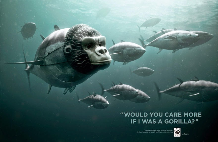 WWF: Bluefin Tuna. Would You Care More If I Was A Panda? - 33 Powerful Animal Ad Campaigns That Tell The Uncomfortable Truth