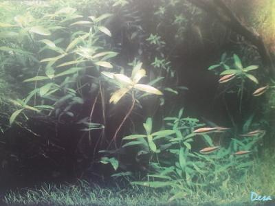 Mimpi bawah air