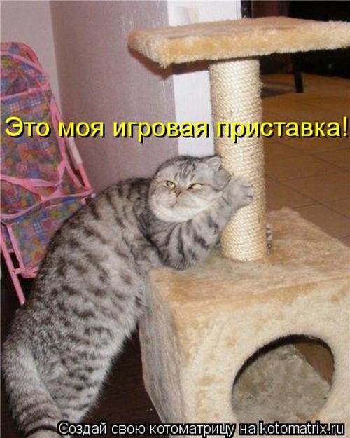 Котоматрица (35 фото)
