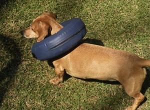 colares de grande porte para cães