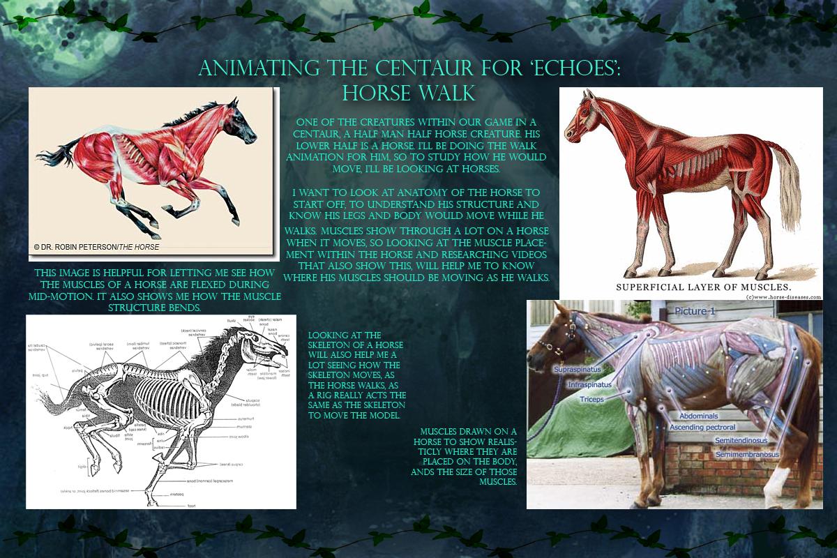 The horse anatomy