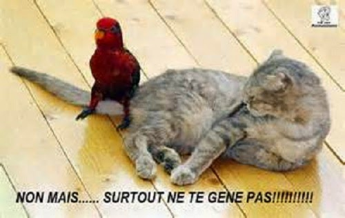 Une photo chat humour