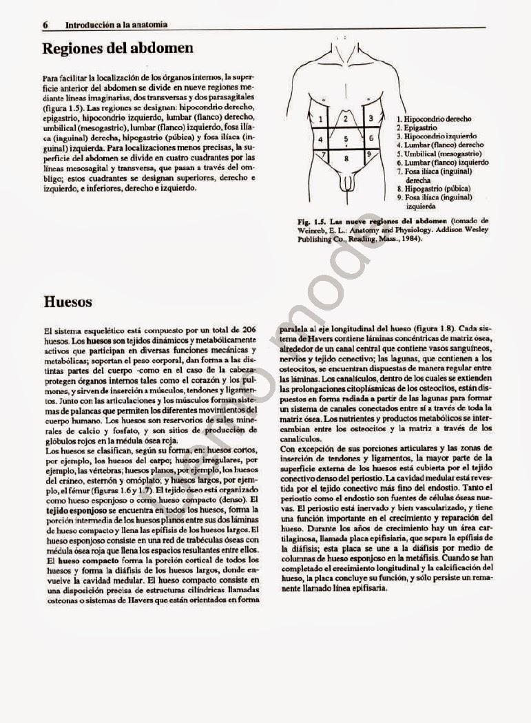 Atractivo Anatomía Fosa Supraclavicular Elaboración - Anatomía de ...