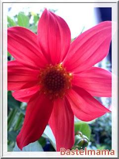 Blumen im August