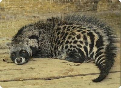 hewan paling aneh dan langka di dunia