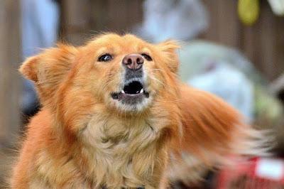 Los ladridos de tu perro