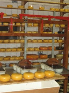 CHEESE FACTORY IN VOLENDAM