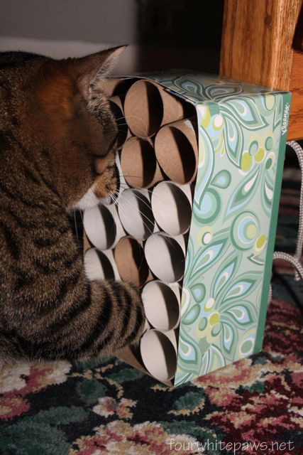 Easy Cat Toys To Make With Tissue Box